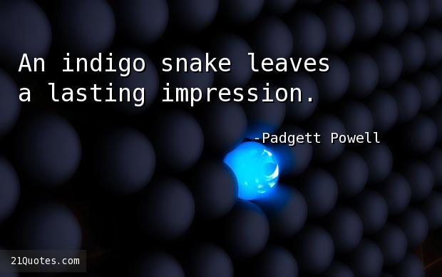 An indigo snake leaves a lasting impression.