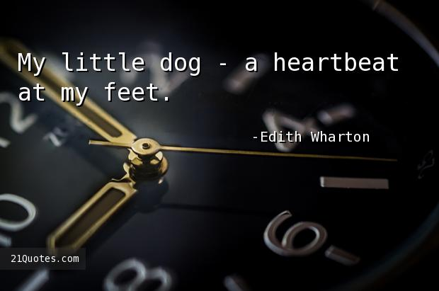 My little dog - a heartbeat at my feet.